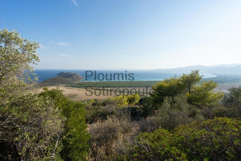 Amphitheatrical plots of land in Schoinias Greece for Sale