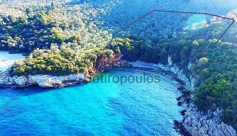 Beachfront Olive Grove in Pelion